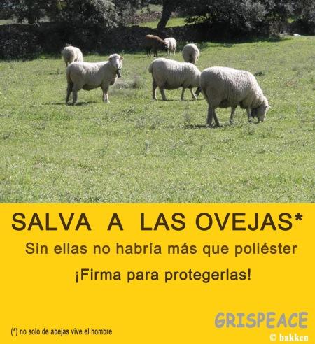 salva-a-las-ovejas
